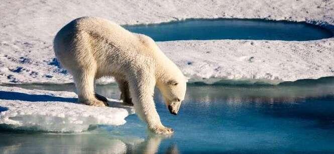 """Chaleur inédite sur l'Arctique, en plein """"cercle vicieux"""""""
