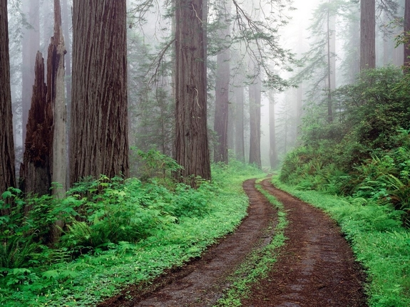 forest_road,_redwood_national_park,_california