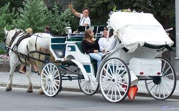 Un héritage à préserver : Cochers, calèches et chevaux dans le Vieux-Montréal