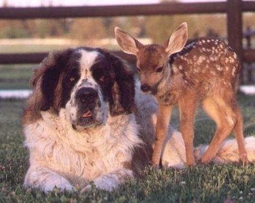 http://lancien.cowblog.fr/images/Chiens/chienbiche2.jpg