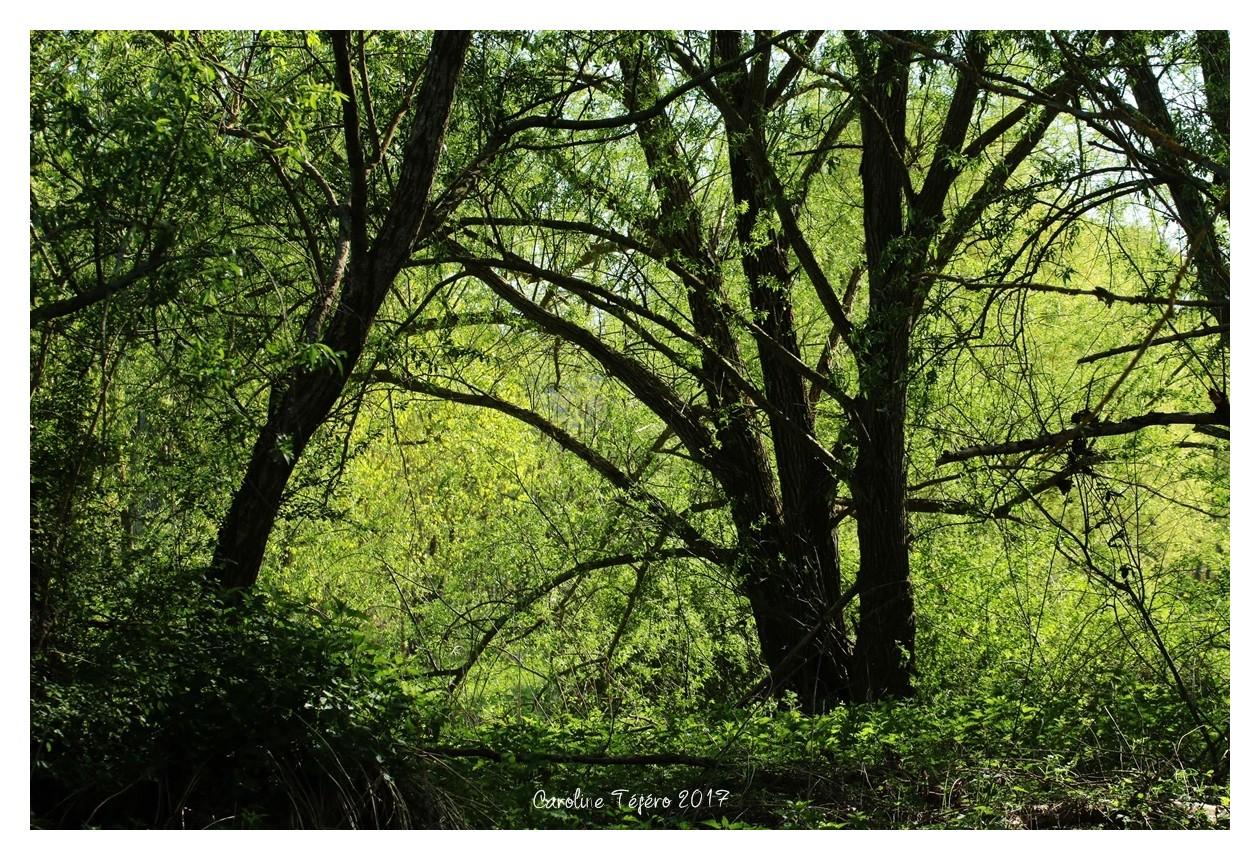 Les bois noirs