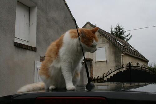 Profession : essayeur de voiture ...