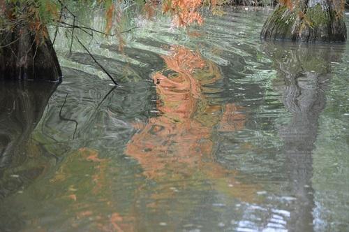 ... couleurs d'automne à Cheverny...