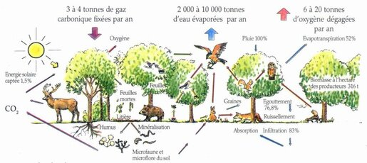 La France des forêts
