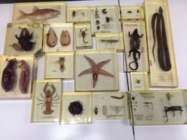 inclusions biodiversité animaux