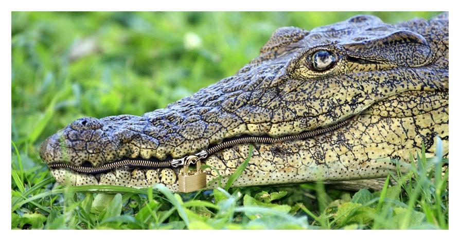 empêcher un crocodile de mordre
