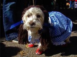 chien dorothy