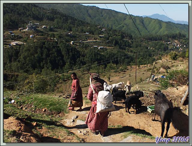 Blog de images-du-pays-des-ours : Images du Pays des Ours (et d'ailleurs ...), Traversée des collines entre Nagarkot et Katmandou - Népal