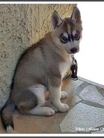 Mayka (2 mois)