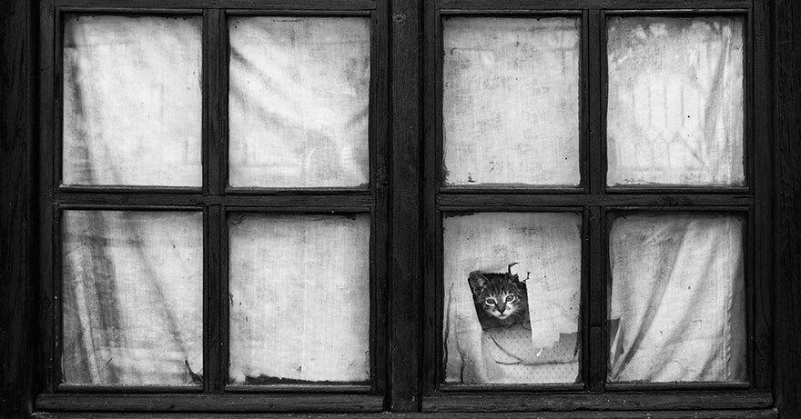 chat-noir-blanc-fenetre
