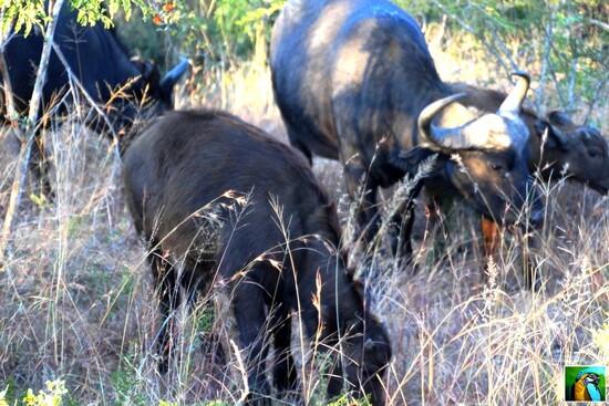 Afrique du Sud : juin 2018: Allez, nous repartons, un autre safari? 1/3