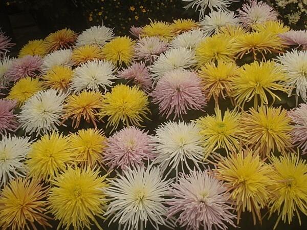 fleurs d automne 009