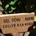 Boldo - Photo : Mistouflette