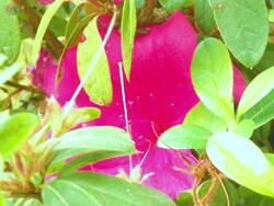 Photos de fleurs de notre île