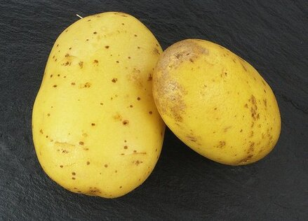 Quelles-proprietes-a-le-jus-de-pomme-de-terre-crue-500x360