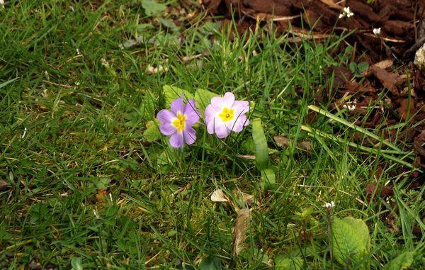 Fleurettes3.jpg