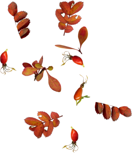 92326773_Carena_Autumn_Crunch_Cluster_7.png