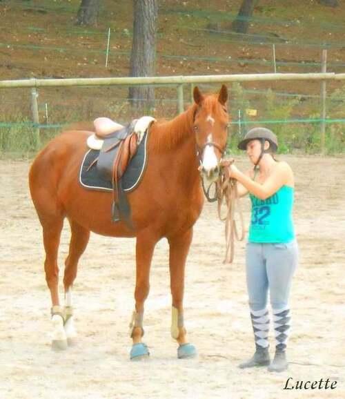 Promenade dans un centre equestre
