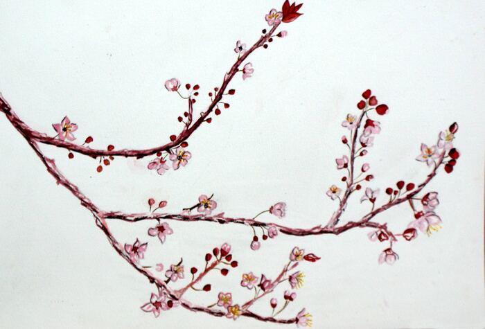 Printemps - Branche de fleurs roses - Aquarelle