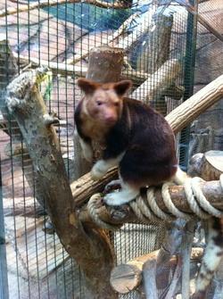 Voyage Zoo de Beauval 2013