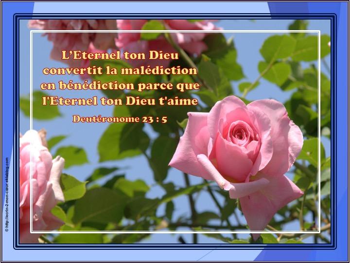 L'Eternel ton Dieu t'aime - Deutéronome 23 : 5