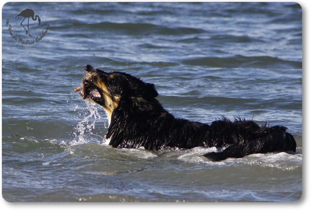 Etang ou mer, il s'en fiche, si c'est de l'eau !