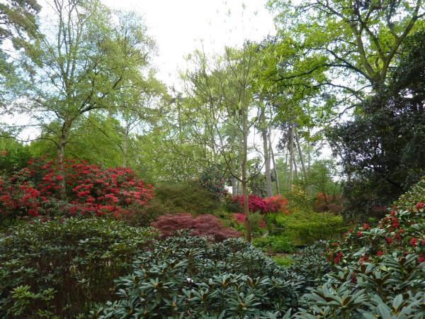 Parc floral printemps 2013 (3)