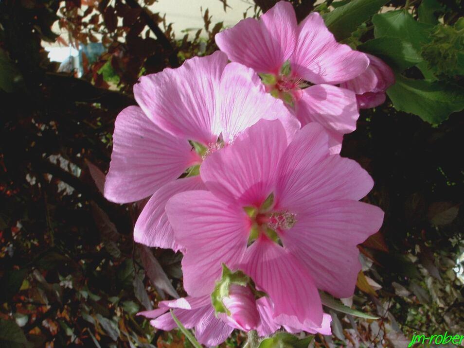 Pour une belle floraison généreuse et abondante