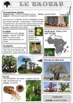 lecture doc le baobab