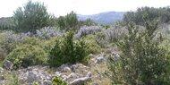 La Provence...!!!