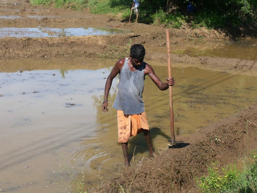 Scènes de vie - Sri Lanka