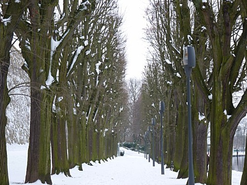Promenade hivernale 005