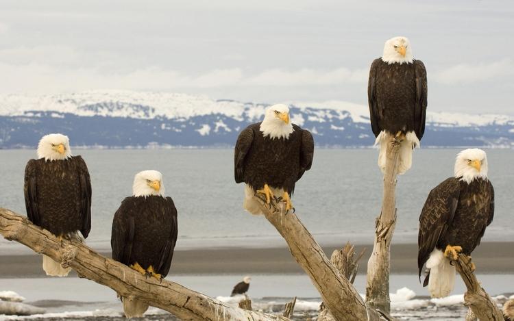 Photos sur les animaux:  40 superbes images