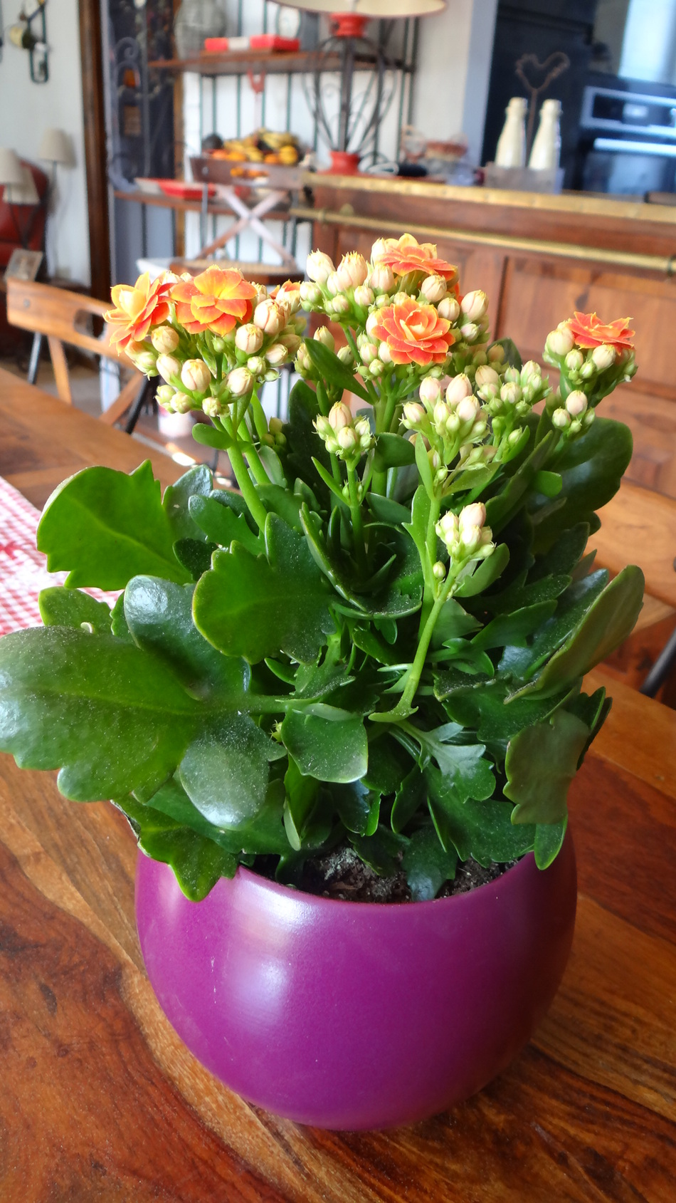 Rosier Kodana Sandrina + le Bouquet de la Semaine
