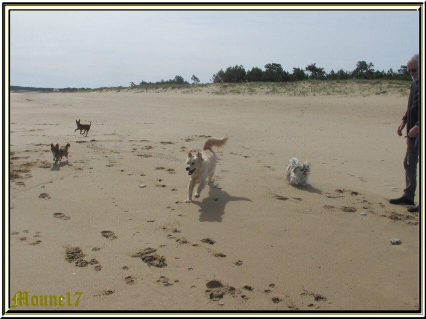 """Les""""Cabots d'Oléron""""à la plage"""