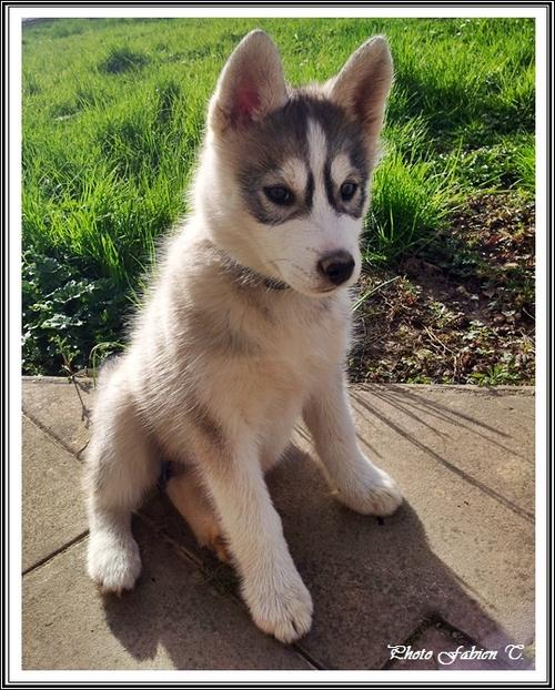 Ioko (2,5 mois)