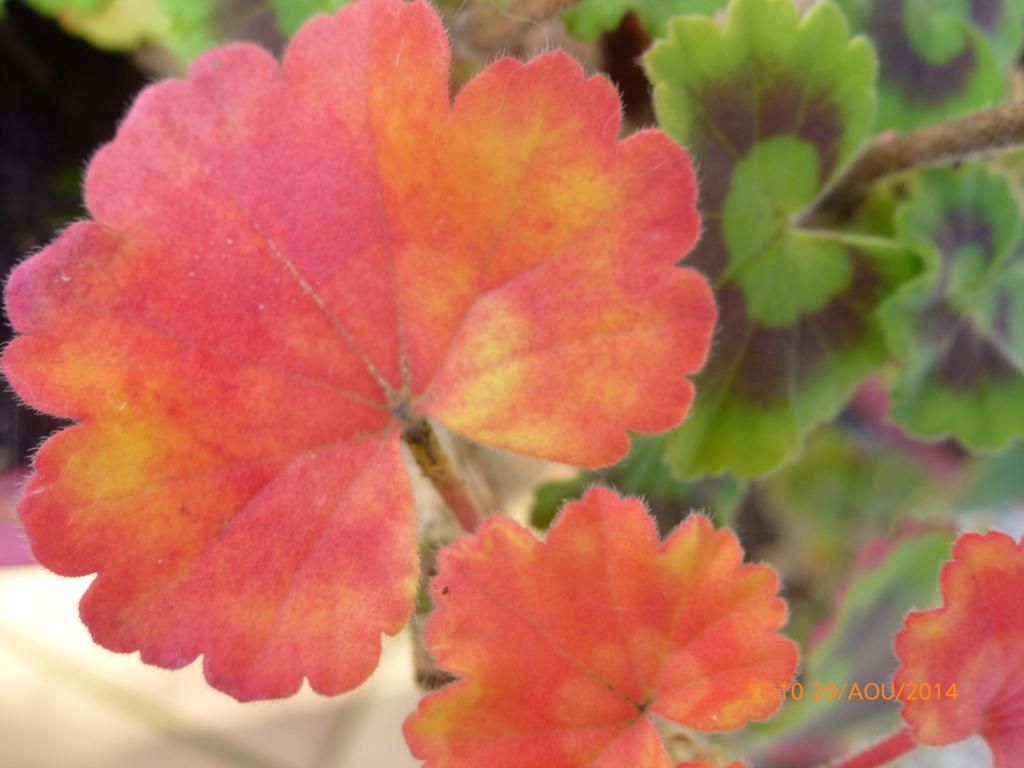 Les prémices de l'automne...