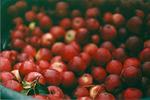 Série d'image fraises.