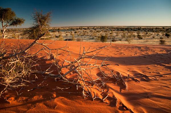 Desert du Kalahari