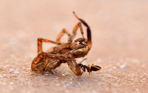 Histoire d'une fourmi