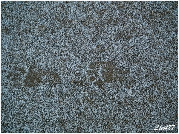 DSCF0593-traces.jpg