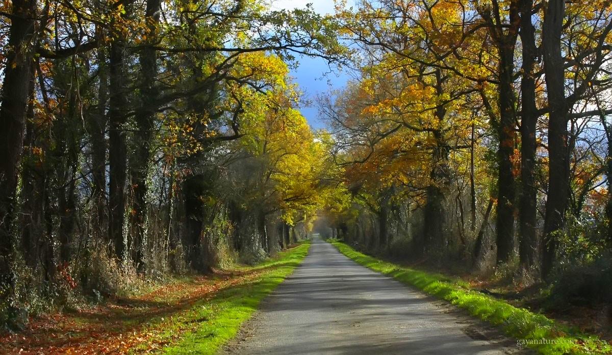 Sur la route ou les chemins