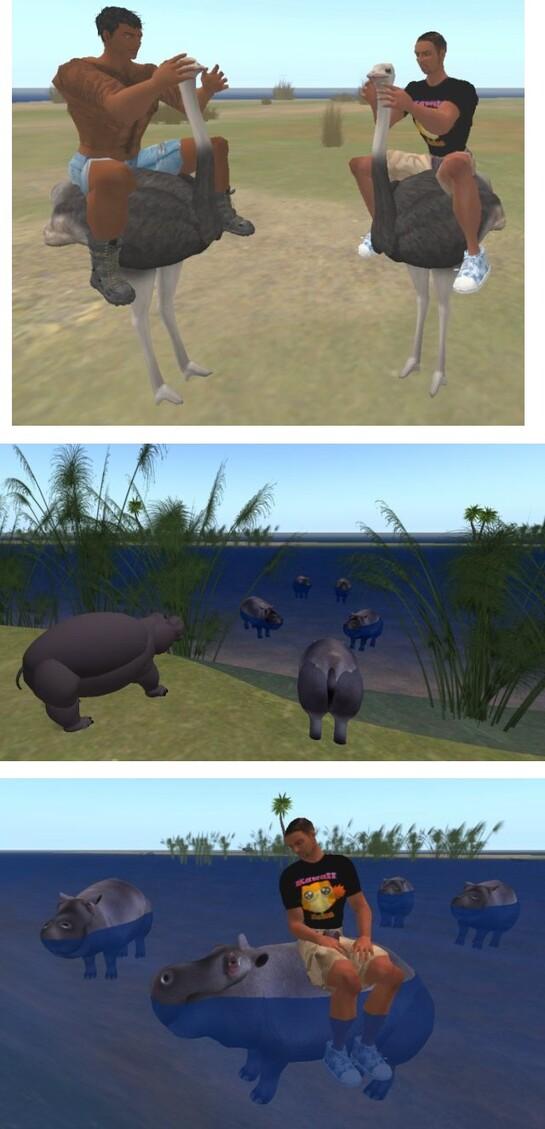 Autruches et Hippopotames