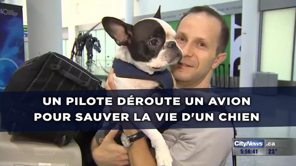 Un chien en danger de mort