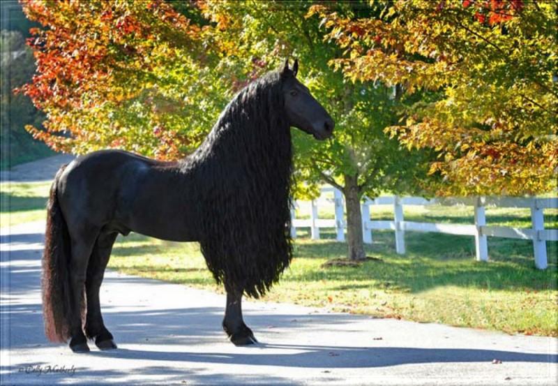Le plus beau cheval du monde