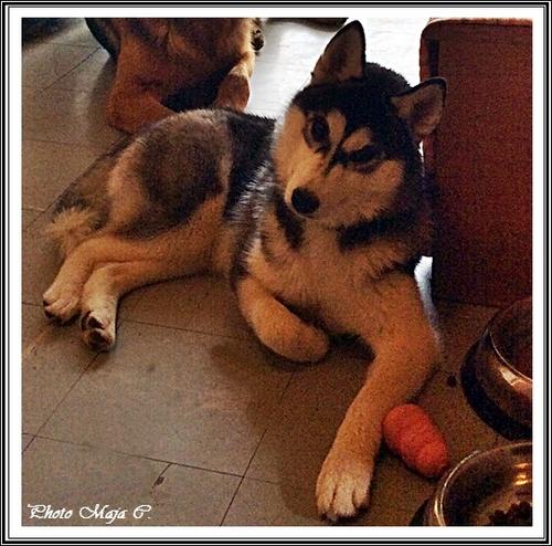 Elfie (7 mois)