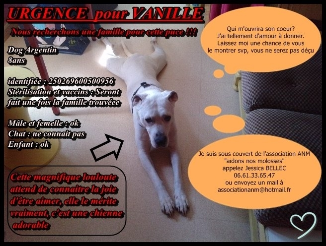 AFFICHE DOGO VANILLE