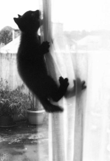 05 - Encore des chats à la fenêtre