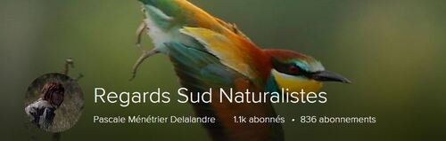 Regards Sud Naturalistes (Ma galerie Flickr)