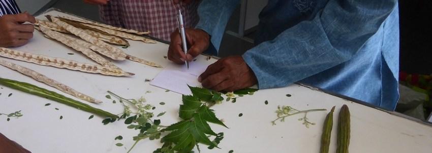 Plantes indiennes aux Antilles (La Sorcière et le Médecin)